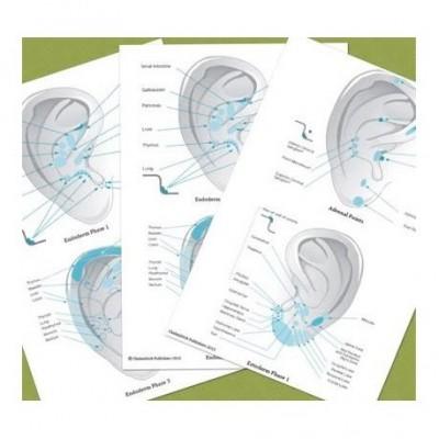 Set Of 5 Auricular Charts