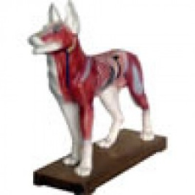 Animal Acupuncture Model - Dog